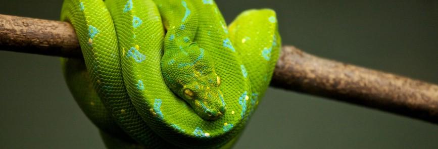 6 Gründe Python zu lernen